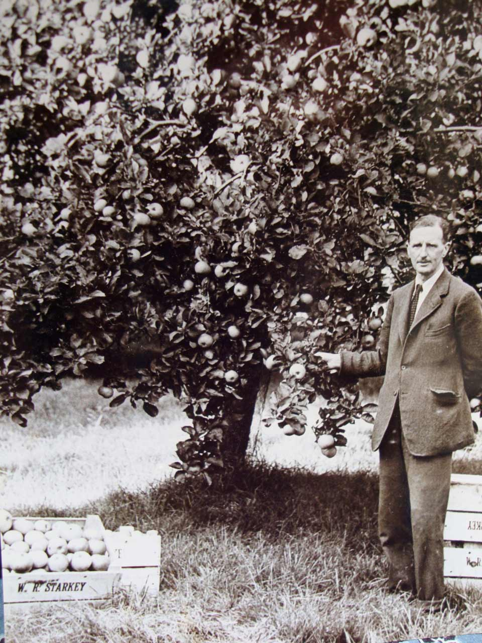 Then came William, seen here with one of the original Bramley trees (we still have some of the boxes!)